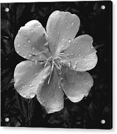 Rainy Days Acrylic Print by Amarildo Correa
