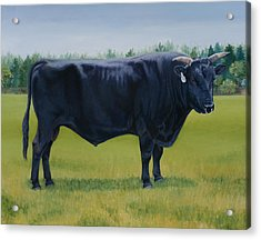 Ralphs Bull Acrylic Print by Stacey Neumiller