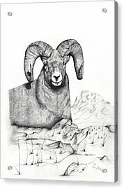 Acrylic Print featuring the drawing Ram by Mayhem Mediums