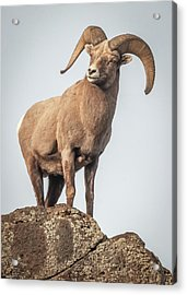 Acrylic Print featuring the photograph Ram Of The Rio Grande by Britt Runyon