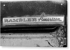 Rambler American Acrylic Print by Audrey Venute