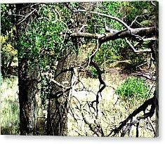 Ramsey Canyon Hike Acrylic Print