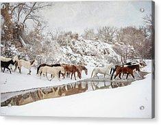 Ranch Horse Winter Acrylic Print