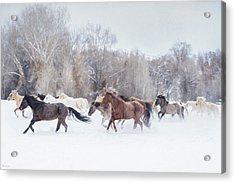 Ranch Run Acrylic Print
