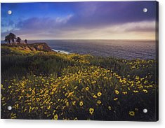 Rancho Palos Verdes Super Bloom Acrylic Print