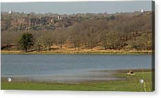 Ranthambore National Park Acrylic Print by Jean-Luc Baron