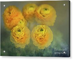 Acrylic Print featuring the photograph Ranunculus by Eva Lechner