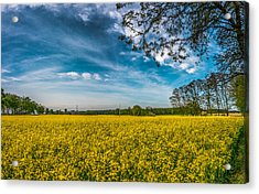 Rapeseed Field Acrylic Print by Dmytro Korol