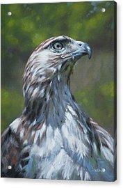 Raptor Acrylic Print by Christopher Reid