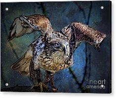 Raptor Hunter Acrylic Print