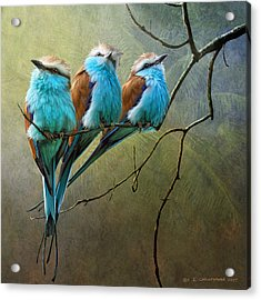 Raquet Tailed Rollers Acrylic Print by R christopher Vest