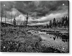 Acrylic Print featuring the photograph Raquette Lake Bog by David Patterson