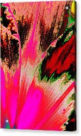 Rare Daylily Acrylic Print
