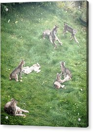 Play Together Prey Together Acrylic Print