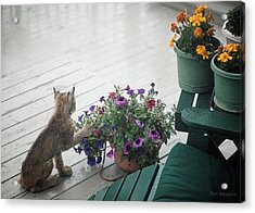 Swat The Petunias Acrylic Print