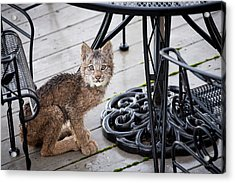 Are You Looking At Me Acrylic Print