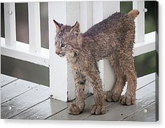 Laser Eyes Big Feet Acrylic Print