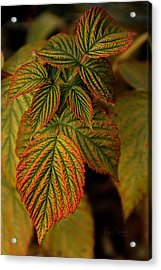 Raspberry Leaves Acrylic Print