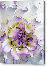 Raspberry And Cream Acrylic Print