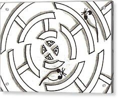 Rat Race Mouse Maze Acrylic Print by Joshua Hullender