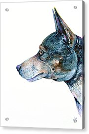 Acrylic Print featuring the painting Rat Terrier by Zaira Dzhaubaeva