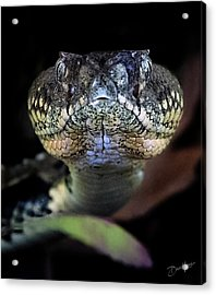 Rattler Eye To Eye Acrylic Print