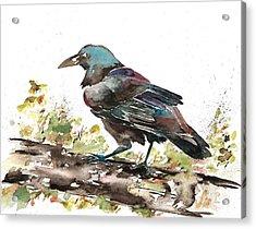 Raven 1 Acrylic Print