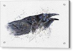 Raven 2 Acrylic Print