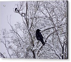 Raven And Magpie Acrylic Print