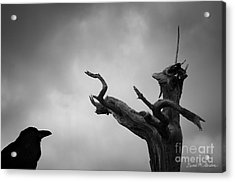 Raven And Shamanic Tree  Acrylic Print