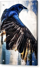 Raven Attitude Acrylic Print by Carolyn Marshall