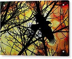 Raven Acrylic Print by Bob Orsillo