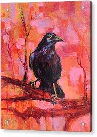 Raven Bright Acrylic Print