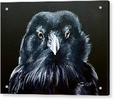 Raven Fluff Acrylic Print