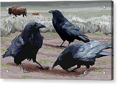 Raven Gathering Acrylic Print