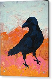 Raven I Acrylic Print by Dodd Holsapple