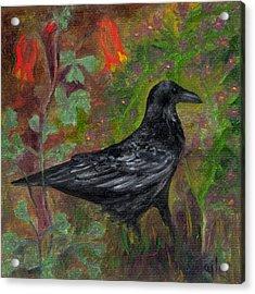 Raven In Columbine Acrylic Print