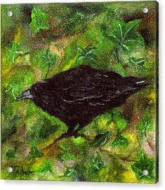 Raven In Ivy Acrylic Print