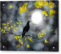 Raven In The Rain Acrylic Print by Laura Iverson