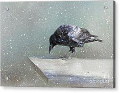Raven In Winter Acrylic Print by Eva Lechner