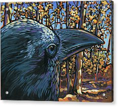 Raven Acrylic Print by Nadi Spencer