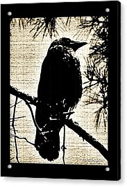 Raven On The Lookout Acrylic Print
