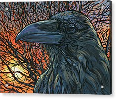 Raven Orange Acrylic Print by Nadi Spencer