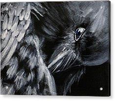 Raven Preening Acrylic Print
