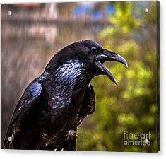 Raven Profile Acrylic Print