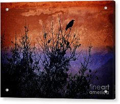 Raven Sentinel Acrylic Print