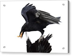 Acrylic Print featuring the photograph Ravens by Jane Melgaard