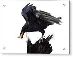 Ravens Acrylic Print