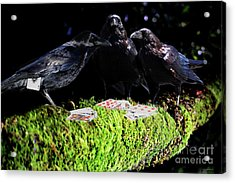 Ravens Playing Poker Acrylic Print by Wingsdomain Art and Photography