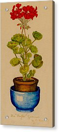 Acrylic Print featuring the painting Ray-bet Geranium by Betty Hammant
